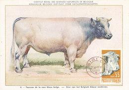 D28475 CARTE MAXIMUM CARD 1963 ROMANIA - TAUREAU BULL COW CP MUSEUM ORIGINAL