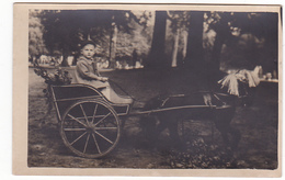 25975 -attelage Enfant Ponney -sans Doute Belgique -sans Doute Carte Photo