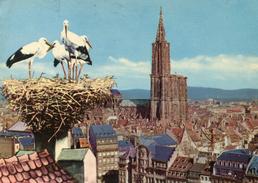France - Strasbourg - Strasbourg