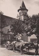 CPSM 10X15 . Le Pays Basque . AINHOA . Un Attelage Basque Devant L'Eglise (Attelage De Boeufs - Ainhoa