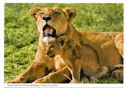 KENYA - Lioness And Cub, - Kenia