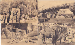 Anvers Antwerpen - Lot 11 Cartes Jardin Zoologique - Dierentuin (Elephant, Tigre, Zèbre....) - Antwerpen