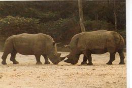 Animaux.. Rhinocéros Thoiry-en-Yvelines - Rhinocéros