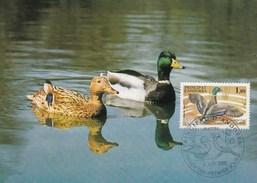 Carte Maximum - Oiseaux - Canard Col-Vert - Andorre - 1985 - Entenvögel