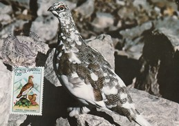 Carte Maximum - Oiseaux - Andorre - Perdrix Blanche - Rebhühner & Wachteln