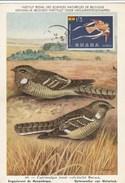 Carte Maximum - Oiseaux - Ghana - Engoulvent De Mozambique - Ghana (1957-...)