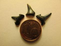 3 Petites Dents De Requin Fossile Océan Pacifique Shark's Tooth Pacific - Fossiles