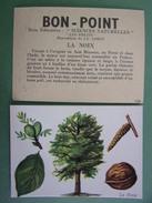 Chromo - Image : BON POINT - FRUIT : La NOIX - Arbre, Feuille, Fleurs - Bon-point Ecole Pour écoliers Sages - Sonstige