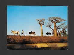 MADAGARCAR - MOROMBE - AFRIQUE - SUR LA BERGE DU CANAL DU MANGOKY - CARTE ÉCRITE DE TULÉAR - Madagascar