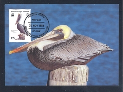British Virgin Islands 1988 Maximum Card Fauna WWF Birds Vogel Oiseaux; Brown Pelican (Pelecanus Occidentalis)