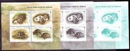 BULGARIA / BULGARIE - 2016 - WWF - Fauna - Tortues / Turtes - Bl Normal + 2Bl Souvenir - Blokken & Velletjes