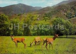Deer - Dilijan National Park - Postal Stationery - 1979 - Armenia USSR - Unused - Arménie