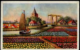NL 03 Nederlande-Holland Land Der Tulpen, Zeichnung-country Of Tulips Drawing Vertikal Gebrochen-vertical Broken Ca 1950 - Sonstige