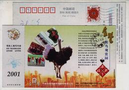 Ostrich Ornamental Farm,China 2001 King Road Special Breeding Farming Company Advertising Pre-stamped Card
