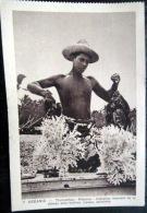 OCEANIE THAOMOUTHOU HIKUERU INDIGENE REVENANT DE LA PECHE AUX HUITRES - Cartes Postales