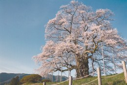 JAPON AVEC TIMBRES - Other