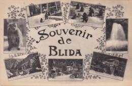 Algeria Blida Souvenir Multi View