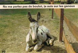 Animaux.. Anes ânes âne ânesse ânon Baudet équidés Humour - Ezels