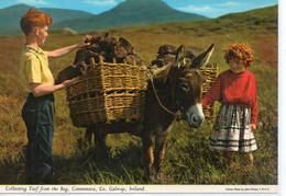 Animaux.. Animée Anes ânes âne ânesse ânon Baudet équidés Connemara Galway Ireland - Burros