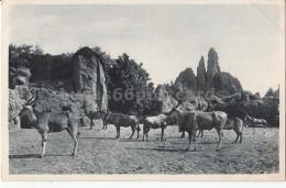 Stellingen Hamburg  - Carl Hagenbecks Tierpark Altona - Afrikanische Steppe - Harburg
