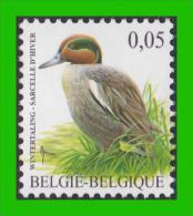 BUZIN - 3623** Sarcelle D´hiver / Wintertaling - 1985-.. Pájaros (Buzin)