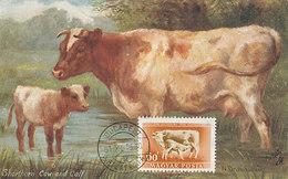D28511 CARTE MAXIMUM CARD 1961 HUNGARY - CATTLE - COW CP VINTAGE ORIGINAL