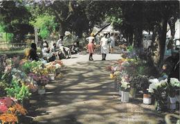 ZIMBABWE - BULAWAYO - Flower Sellers - Photography David Trickett - Zimbabwe