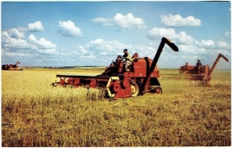 Moissonneuse Batteuse. Modern Wheat Harvesting. - Tractors