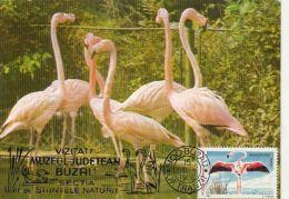 BIRDS, FLAMINGO, CM, MAXICARD, CARTES MAXIMUM, 1989, ROMANIA