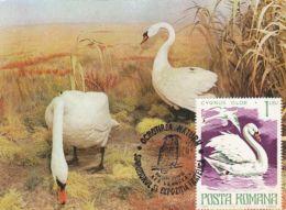 BIRDS, WHITE SWAN, CM, MAXICARD, CARTES MAXIMUM, 1978, ROMANIA