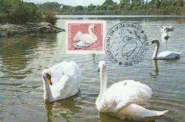 BIRDS, WHITE SWAN, CM, MAXICARD, CARTES MAXIMUM, 1984, ROMANIA