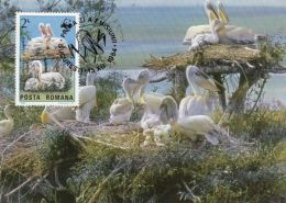 BIRDS, PELICANS, CM, MAXICARD, CARTES MAXIMUM, OBLIT FDC, 1984, ROMANIA
