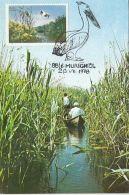 BIRDS, PELICANS, CM, MAXICARD, CARTES MAXIMUM, 1978, ROMANIA