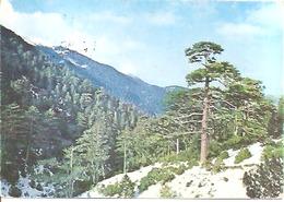 LIOGARA (SUD ALBANIA) - Albania