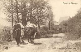 ROCHEFORT   ---  Retour Du Pâturage - Rochefort