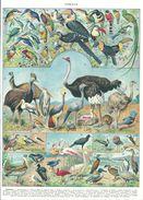 Oiseaux Et Nids Recto-verso Larousse 1948 - Vieux Papiers