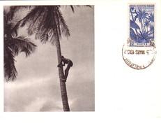 AOF - GUINEE FRANCAISE - IONYL - CARTE MAXIMUM - GUINEE - RECOLTE DES NOIX DE COCOS. - Sudan (1954-...)