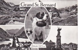 Switzerland St Bernard Multi View 1961 Real Photo - VS Valais