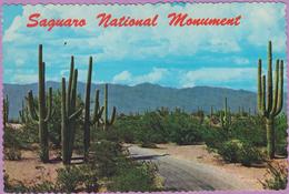 Usa °° Arizona - Tucson - Roadway Trough SAGUARO National Monument - Dentelée écrite  **  LUXE - Tucson