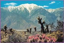 Usa °° Californie - Palm Springs . San Jacinto Mountain - Dentelée - écrite - Palm Springs