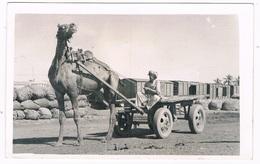 ASIA-1077 : KARACHI : Camel Cart - Pakistan