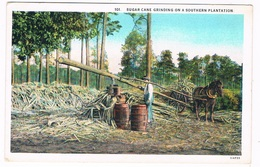 US-707   SUGAR CANE GRINDING On A Southern Plantaion - Cultivation
