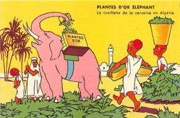 """¤¤  -  ALGERIE  -  Carte Publicitaire  - Plantes D' """" OR ELEPHANT """"  - La Cueillette De La Verveine   -  ¤¤ - Argelia"""