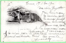 D2001 - LIONNE Des ZIBANS - Lions