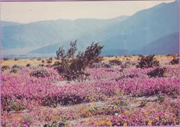 Usa °° Arizona - Lavenders And Verbens Carpets . Désert - écrite 1987  *  T B E - Andere