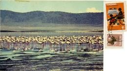TANZANIA  Flamingos In The Lake Natron  Fenicotteri Nice Stamps - Tanzania