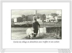 Rabassier Le Cochon Truffier Truffe Truffes Tartufo Champignon Salles Verdon Departement VAR  Fungo Barrage Lire Annonce - Sin Clasificación