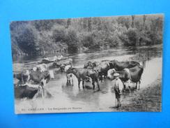 77 )  01  - Chelles - N°41 -  La Baignade En Marne  - Gardien De Vache - EDIT - - Chelles