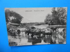 77 )  01  - Chelles - Baignade En Marne - Gardien De Vaches - EDIT - Photo. J. Dijon - Chelles