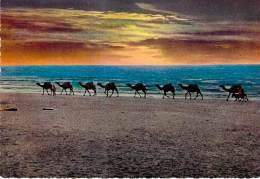 ASIE Asie - JORDANIE Jorda - DEAD SEA SUNSET - Coucher De Soleil Sur La Mer Morte - CPSM Dentelée Colorisée - - Jordanien